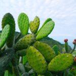 Kaktusfeigenöl und natürliche Bio Gesichtöle & Körperöle